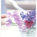 朝美人Lesson2♪朝、花を愛でてみる