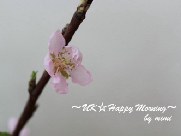 2012-03-02-2_1