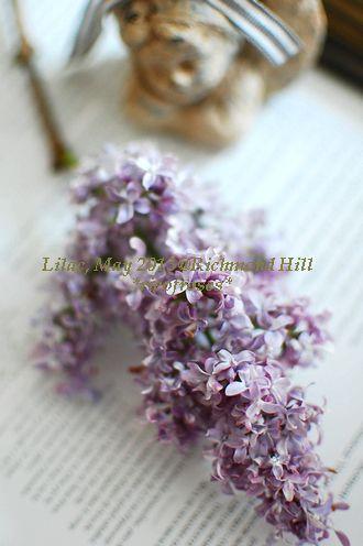 Lilac angel
