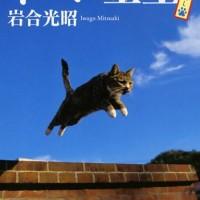 ニッポンの個性的な猫たちが大集合!岩合光昭のフォトエッセイ『ネコに金星』