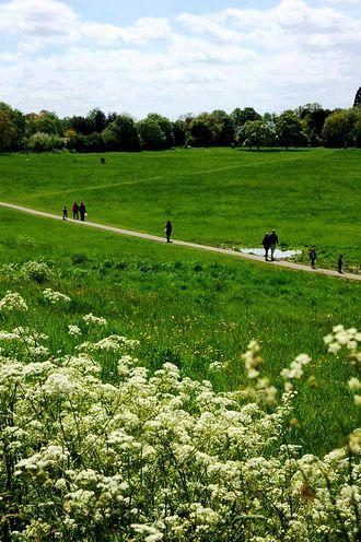 meadow best