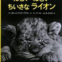 愛らしい写真絵本『ねむいねむいちいさなライオン』