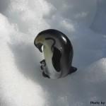地球の果てのペンギン写真集