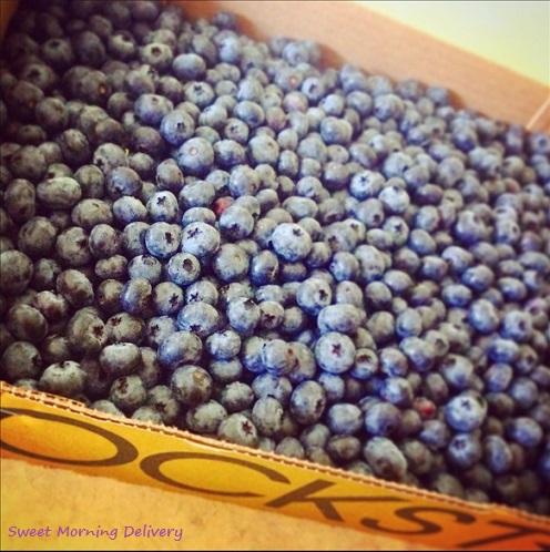 Blue Berry U-pick_2