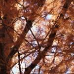 おおきな木に癒される朝〜木をテーマにした本〜