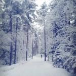 まだ真っ白なフィンランド