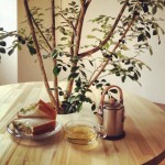部屋の中の「木陰」で過ごす、とっておきの朝時間