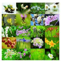 「日本花紀行」季節の花を訪ねて
