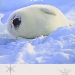 ふわふわ真っ白!『アザラシの赤ちゃん』究極のラブリー写真集