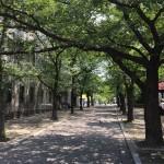 日本の古都に魅せられて早起き朝活♪