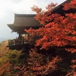 秋の京都は「朝」を楽しむべし!おすすめ紅葉スポット&朝食のお店