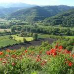 「田舎」っていいね!自然あふれる景色やコミュニティの魅力に注目