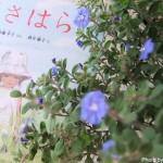 【日曜日の絵本】草の匂いと風の音、光あふれる絵本