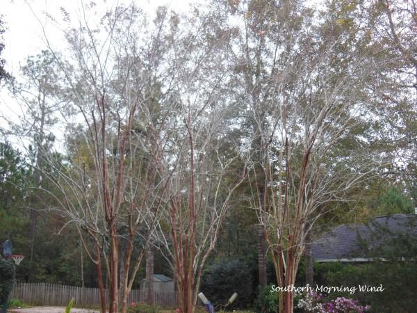 winter tree2