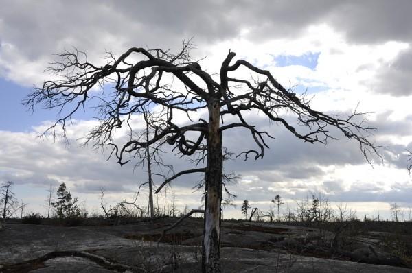 tree-138563_960_720