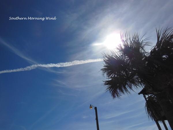 飛行機雲とパームツリー