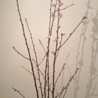 市場で発見! ヨーロッパのお花見 + いちご