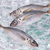 [あしたの朝ごはん]第37話:魚をおいしく食べる