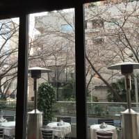 【六本木】桜並木を眺めながら絶品朝ごはん@ローダーデール