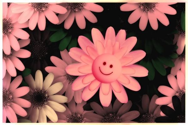 flowers-717609_960_720