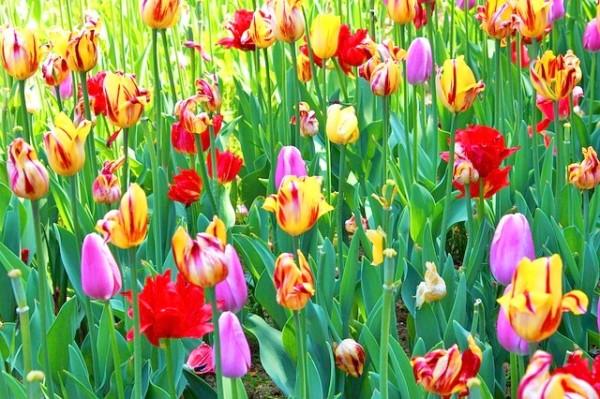 flowers-969593_640