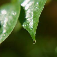 [あしたの朝ごはん]第51話:草木の茂る森の家
