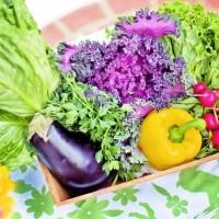 1日350gの野菜を食べるコツと7つのルール