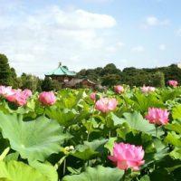 【上野】蓮の花を見て朝ごはん
