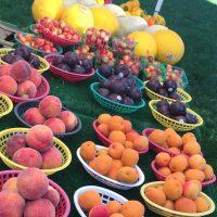 野菜・果物⭐️見てるだけで幸せを感じる!