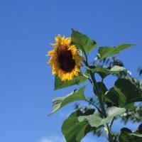 8月がスタート!「山の日」「お盆」…今月の行事って?
