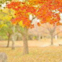今日は「白露(はくろ)」…この季節の特徴とは?