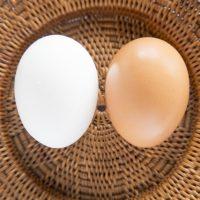 茶色と白のたまごの違いって知ってる?朝食の定番「たまごかけごはん」