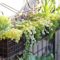 太陽の光を浴びることから!大好きなお庭で過ごす私の朝時間
