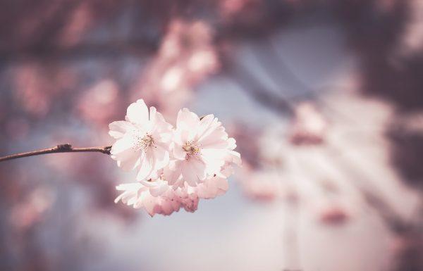 pink-1326168_960_720
