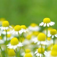 つら~い花粉症、私の対策法