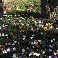 春の訪れとワッフルデー