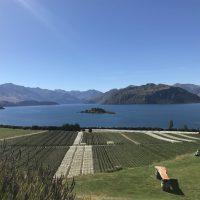 世界で最も美しいワイナリーの一つ、リッポン@Wanaka NZ。