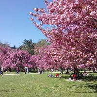 パリの桜の名所