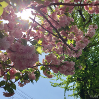 春の日の朝