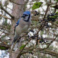 朝散歩で出会った、素敵な野鳥達