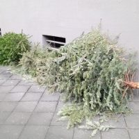 クリスマスツリーのその後