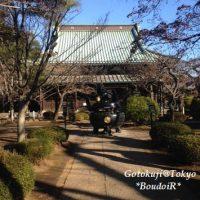 朝の参拝(Neko lover pilgrimage to birthplace of lucky cat)