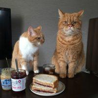 おいしさのコツはケチらず塗ること!「ピーナッツバター&ジャムサンド」