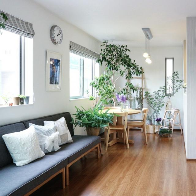 観葉植物のあるお部屋