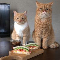 栄養満点!タマゴは粗めにつぶして作りたい「アボカドサンド」