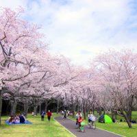 春の風物詩!「お花見」にまつわる英語表現いろいろ♪