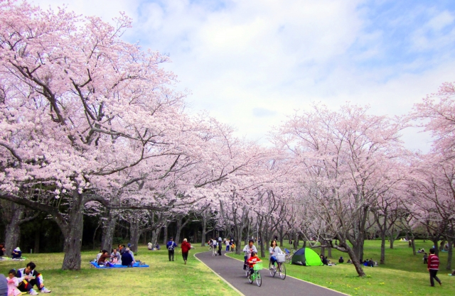 春の風物詩!「お花見」は英語でどう言う?