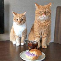 今週のおすすめパン★水切りヨーグルトがポイント「ベーグルサンド」