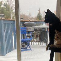 猫達と雪見。〜北国の春はまだ来ません〜