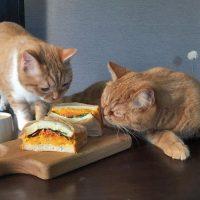 """野菜たっぷり♪一晩寝かせて""""しっとり""""がポイント「サンドイッチ」"""